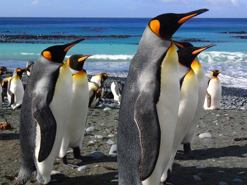 Картинки антарктида пингвины